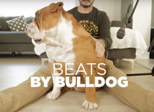 beatsbybulldog